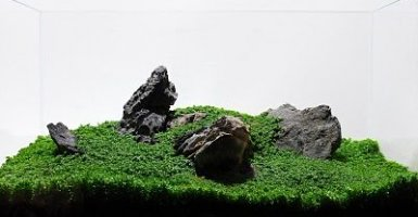 Aquascape met stenen