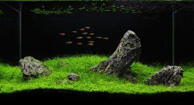 Aquascape mooi