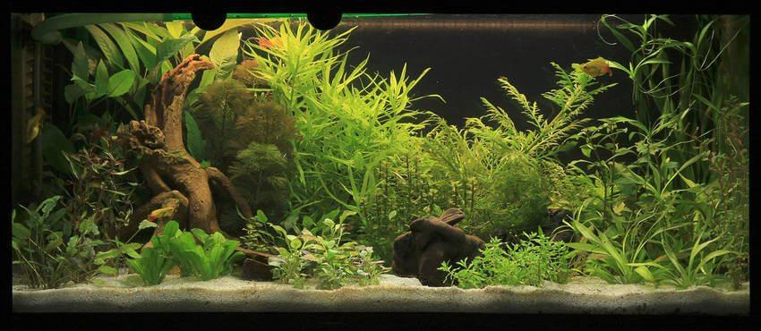 aquarium zoals het hoort