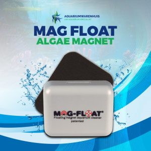 Mag float algae magnet tegen algen op het aquariumglas