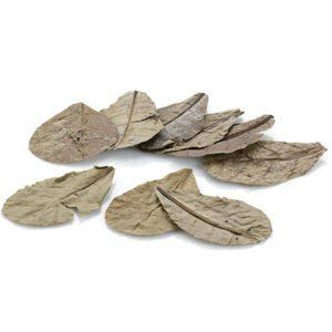 eheim-natural-care-zee-amandelboombladeren-inh-9-g-catappa