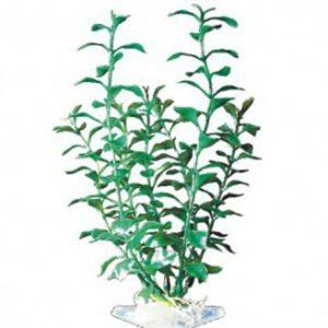 penn-plax-plant-groen-blooming-ludwigia-p-12sh