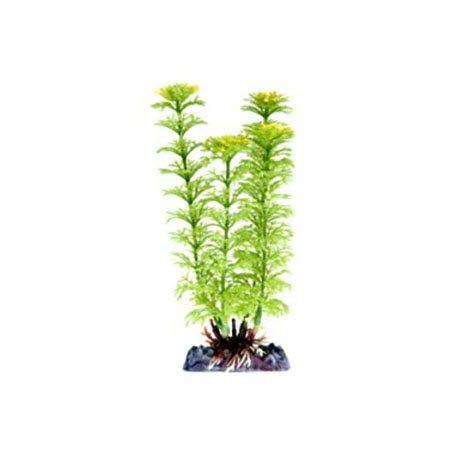 pp-plant-groen-ambulia-p-18lh