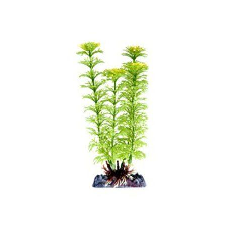 pp-plant-groen-ambulia-p-18sh