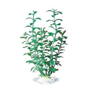 pp-plant-groen-blooming-ludwigia-p-12elh