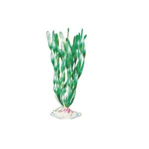 pp-plant-groen-corkscrew-val-p-17lh