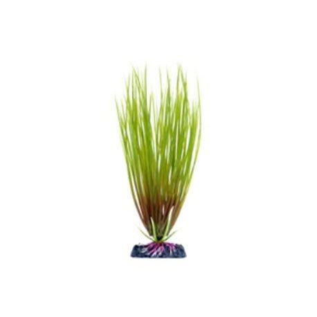 pp-plant-groen-hair-grass-p-16mh