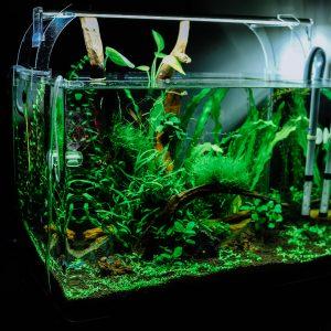 Aquarium algumin algenvrij totaal