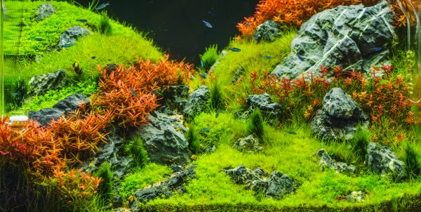 Aquarium algen vrij met Algozid