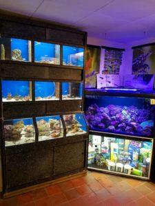 aquarium winkel van binnen
