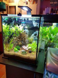 mooi aquarium bak met planten