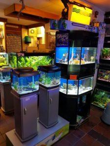 nog meer aquaria in de winkel
