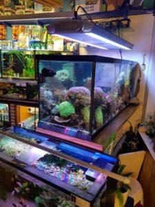 zout water aquarium bak