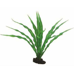 Decoratie planten