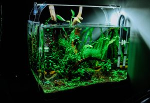 aquarium gekocht